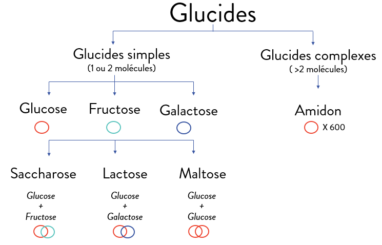 classification-glucides