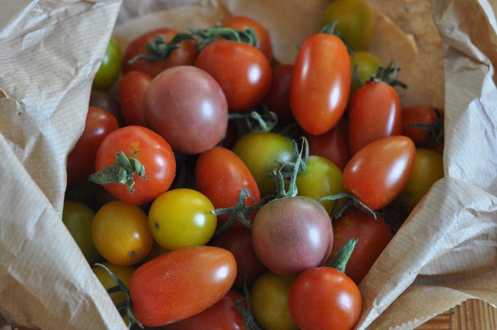 tomates-multicolores