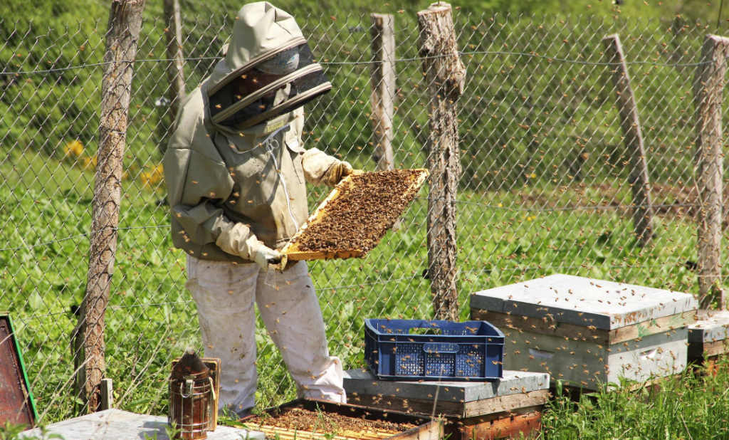 Coralie en tenue d'apicultrice